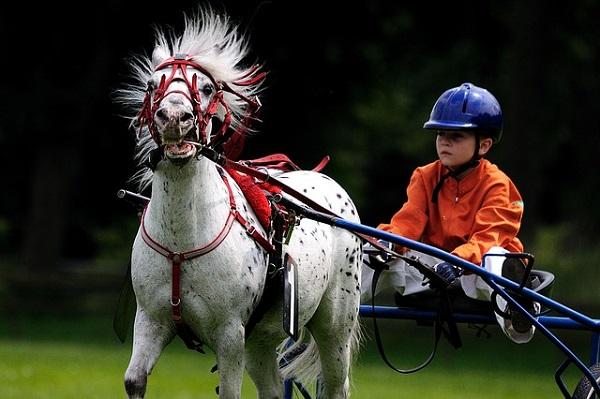 дохлая лошадь меняем наездников