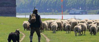 байка про консультанта и пастуха