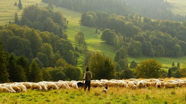 консультант и пастух
